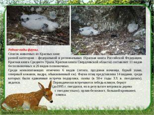 Редкие виды фауны. Список животных из Красных книг разной категории – федера