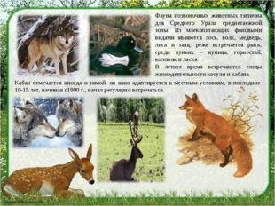Фауна позвоночных животных типична для Среднего Урала среднетаежной зоны. Из