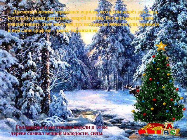 Древние племена германцев верили, что в ели живёт дух леса, который хранит р...