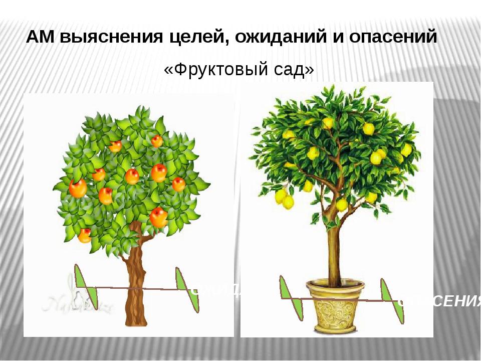АМ выяснения целей, ожиданий и опасений ОЖИДАНИЯ ОПАСЕНИЯ «Фруктовый сад»