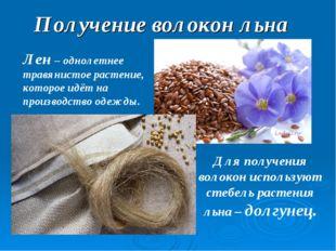 Получение волокон льна Лен – однолетнее травянистое растение, которое идёт на