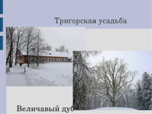 Тригорская усадьба Величавый дуб