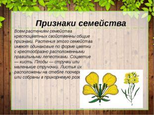 Признаки семейства Всем растениям семейства крестоцветных свойственны общие