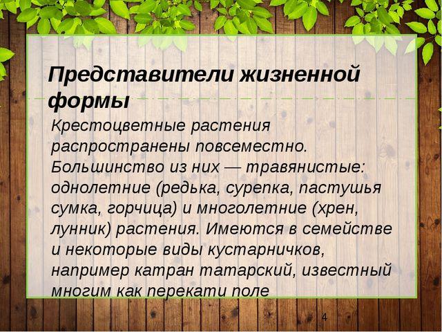 Представители жизненной формы Крестоцветные растения распространены повсемес...