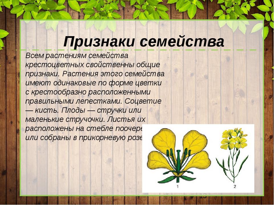 Признаки семейства Всем растениям семейства крестоцветных свойственны общие...
