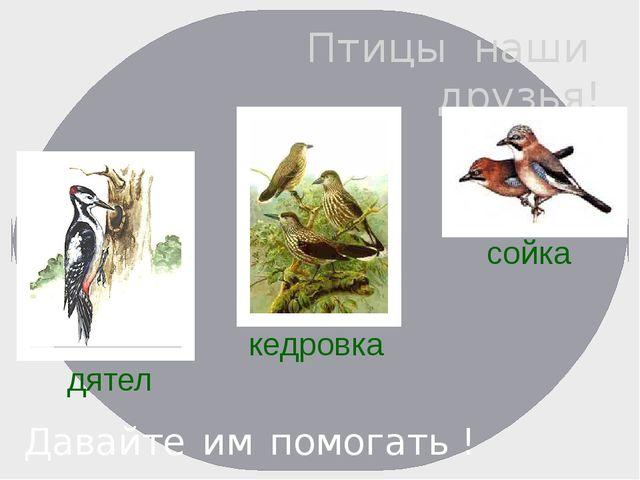 Птицы наши друзья! Давайте им помогать ! дятел сойка кедровка