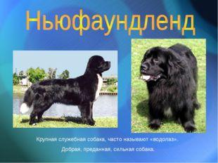 Крупная служебная собака, часто называют «водолаз». Добрая, преданная, сильна