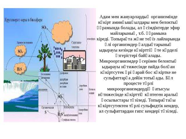 Адам мен жануарлардың организмінде күкіртаминқышқылдарымен белоктың құрамын...