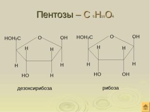 Пентозы – С 5Н10О4