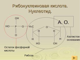 Рибонуклеиновая кислота. Нуклеотид.