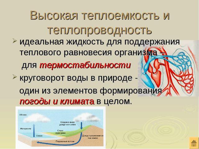 идеальная жидкость для поддержания теплового равновесия организма – для термо...