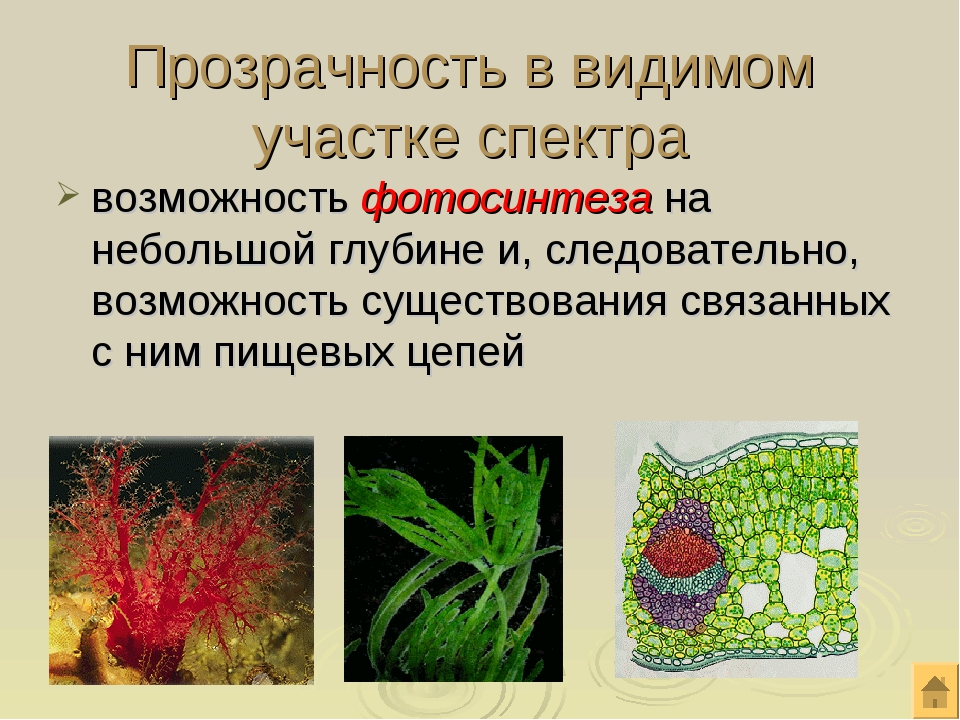 Прозрачность в видимом участке спектра возможность фотосинтеза на небольшой г...