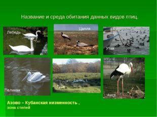 Название и среда обитания данных видов птиц. Лебедь Цапля Утки Пеликан Гуси А