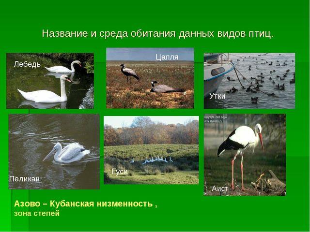 Название и среда обитания данных видов птиц. Лебедь Цапля Утки Пеликан Гуси А...