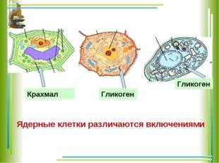 Ядерные клетки различаются включениями Крахмал Гликоген Гликоген