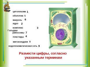 цитоплазма оболочка вакуоль ядро комплекс Гольджи рибосомы пластиды 3 2 1 4