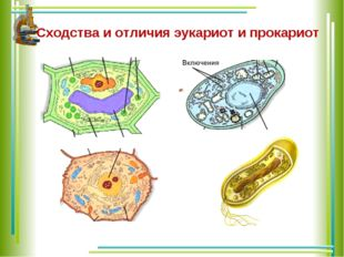 Сходства и отличия эукариот и прокариот