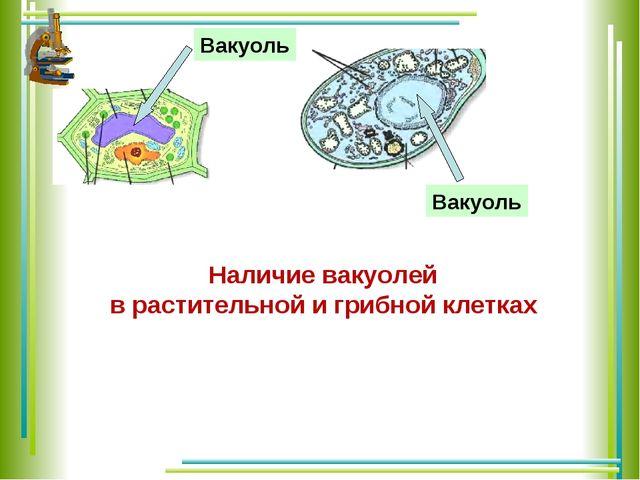Наличие вакуолей в растительной и грибной клетках Вакуоль Вакуоль