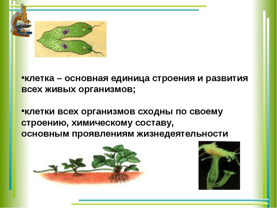 клетка – основная единица строения и развития всех живых организмов; клетки...