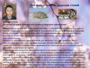 Савельев Саша рассказал об очень интересном жителе даурского заповедника Кот