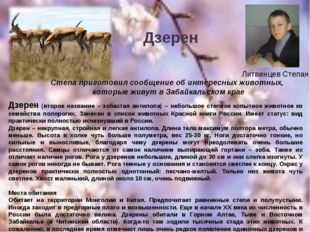 Литвинцев Степан Дзерен (второе название – зобастая антилопа) – небольшое сте