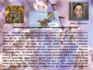 Миша Мажирин Рысь - типичная кошка, хотя величиной с крупную собаку, которую