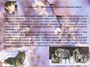 Диана Борякова Где только не обитаетсерый волк! Его можно встретить в Европе