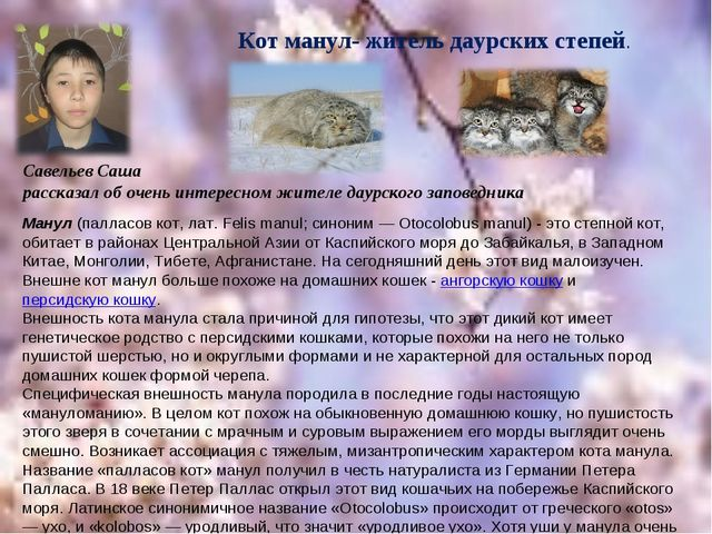Савельев Саша рассказал об очень интересном жителе даурского заповедника Кот...