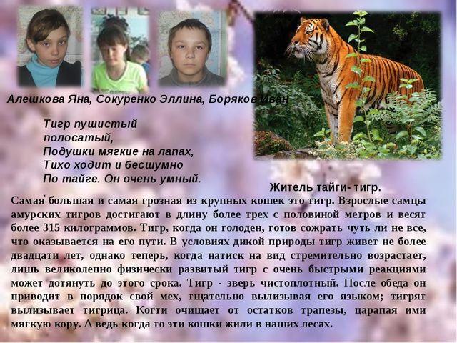 Житель тайги- тигр. Тигр пушистый полосатый, Подушки мягкие на лапах, Тихо хо...