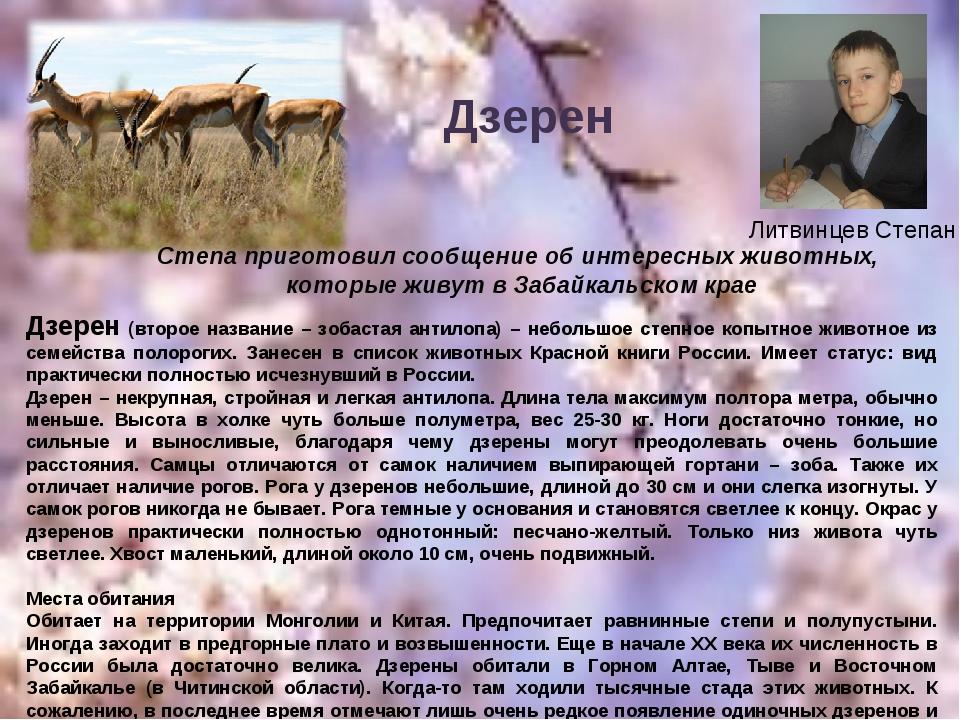 Литвинцев Степан Дзерен (второе название – зобастая антилопа) – небольшое сте...
