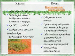 Почвы Красно-желтые ферраллитные Содержат много железа Органические вещества