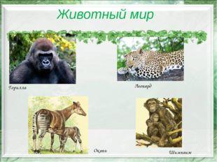 Животный мир Горилла Леопард Окапи Шимпанзе