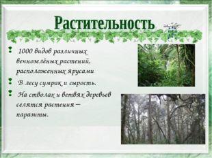 1000 видов различных вечнозелёных растений, расположенных ярусами В лесу сум