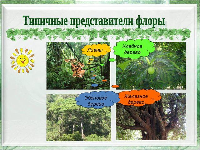 Лианы Хлебное дерево Железное дерево Эбеновое дерево