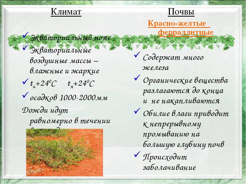 Почвы Красно-желтые ферраллитные Содержат много железа Органические вещества...