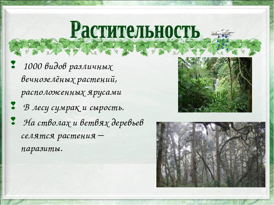 1000 видов различных вечнозелёных растений, расположенных ярусами В лесу сум...