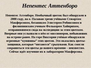 Непентес Аттенборо Непентес Аттенборо. Необычный цветок был обнаружен в 2000
