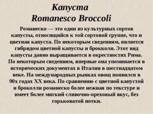 Капуста Romanesco Broccoli Романеско — это один из культурных сортов капусты,