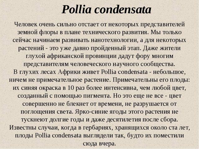 Pollia condensata Человек очень сильно отстает от некоторых представителей зе...