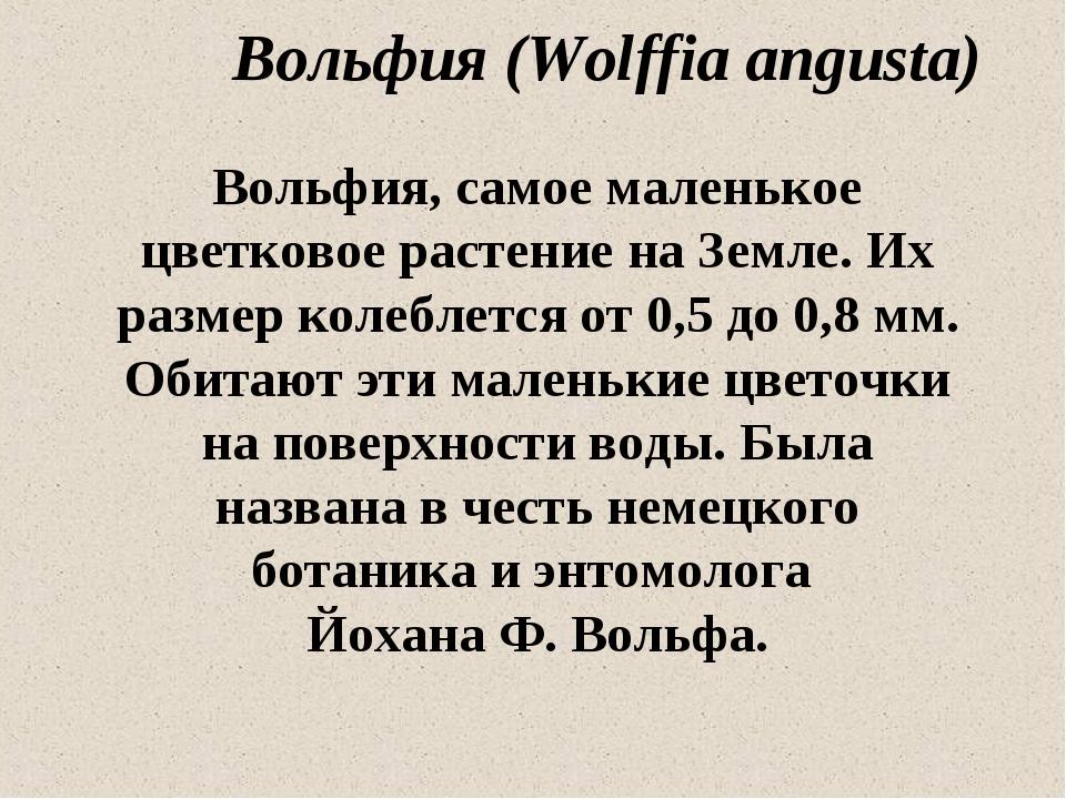 Вольфия (Wolffia angusta) Вольфия, самое маленькое цветковое растение на Земл...