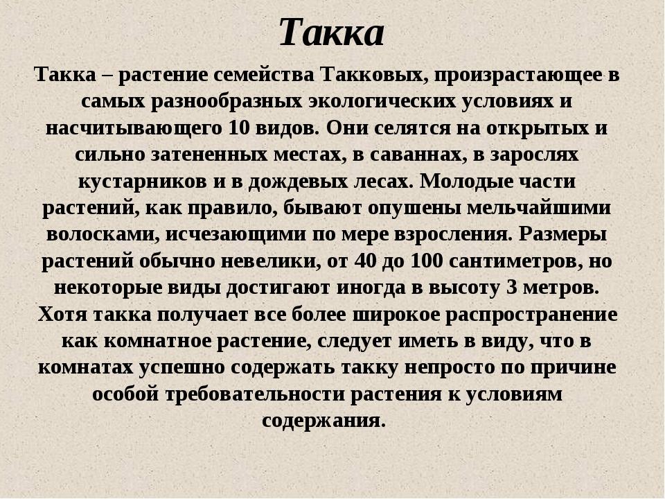 Такка Такка – растение семейства Такковых, произрастающее в самых разнообразн...