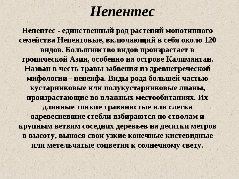 Непентес Непентес - единственный род растений монотипного семейства Непентовы...