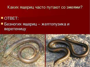 Каких ящериц часто путают со змеями? ОТВЕТ: Безногих ящериц – желтопузика и в