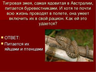 Тигровая змея, самая ядовитая в Австралии, питается буревестниками. И хотя те