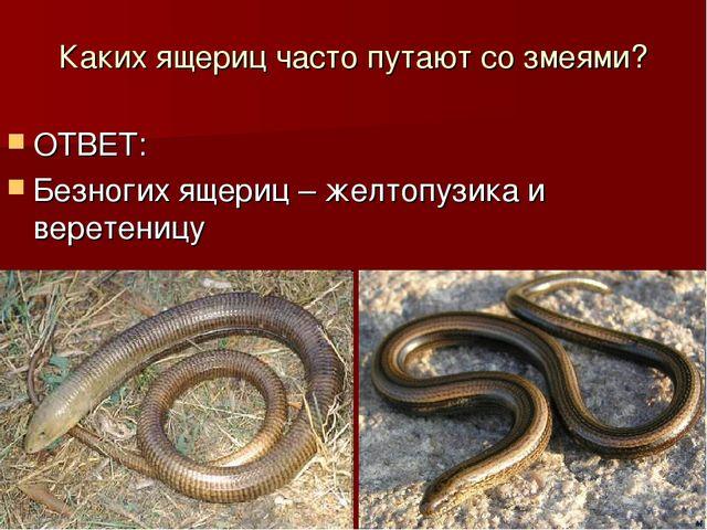 Каких ящериц часто путают со змеями? ОТВЕТ: Безногих ящериц – желтопузика и в...