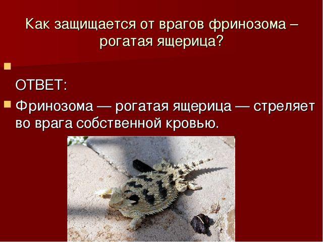 Как защищается от врагов фринозома – рогатая ящерица? ОТВЕТ: Фринозома — рога...