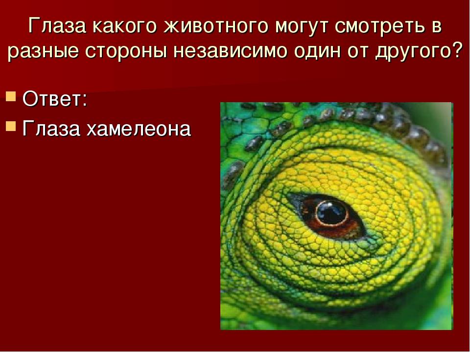 Глаза какого животного могут смотреть в разные стороны независимо один от дру...