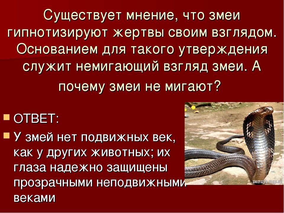 Существует мнение, что змеи гипнотизируют жертвы своим взглядом. Основанием д...