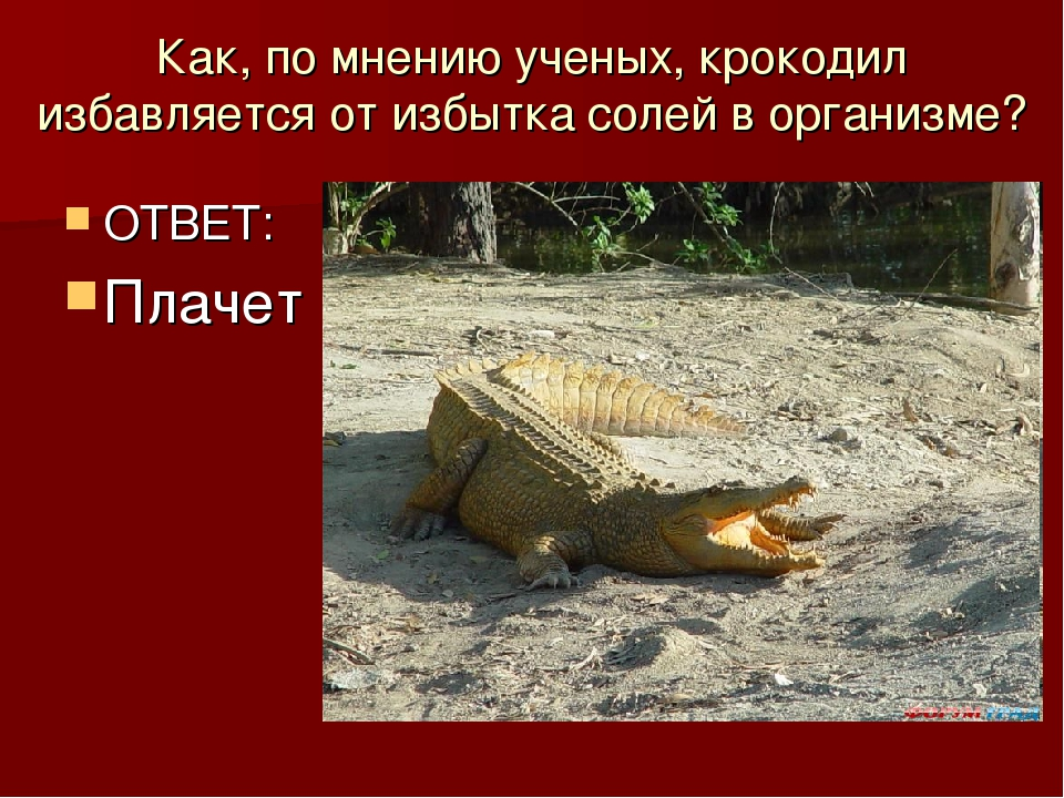 Как, по мнению ученых, крокодил избавляется от избытка солей в организме? ОТВ...