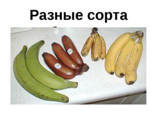 Разные сорта бананов